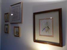 framed bird art