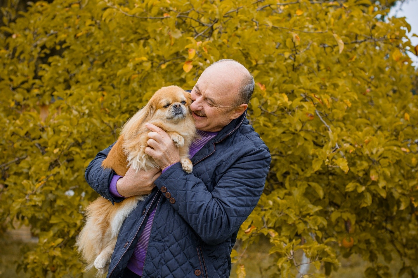 About Pet Therapy for Older Adults and the Best Dogs for Seniors